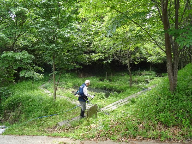 淡輪小学校1年生にお土産にあげたドングリが苗木になって帰ってきました     by     (TATE-misaki)_c0108460_21164923.jpg