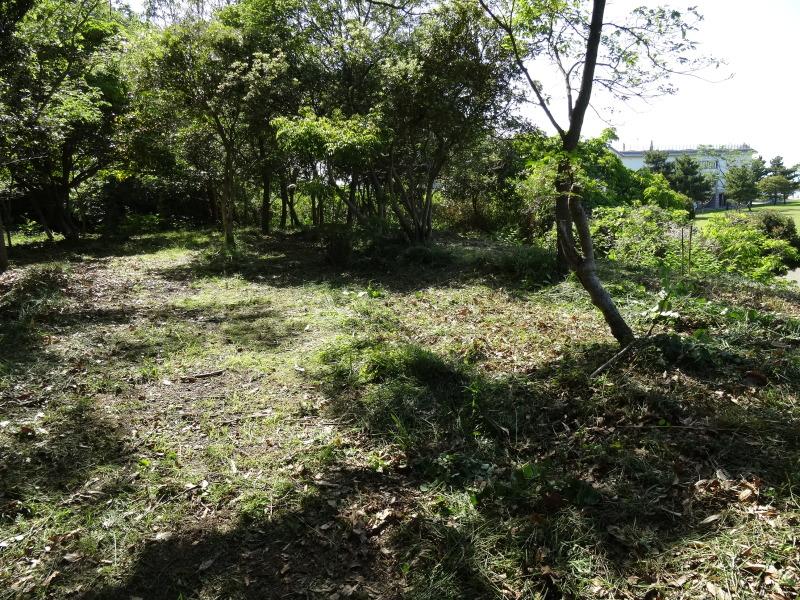 淡輪小学校1年生にお土産にあげたドングリが苗木になって帰ってきました     by     (TATE-misaki)_c0108460_21262813.jpg