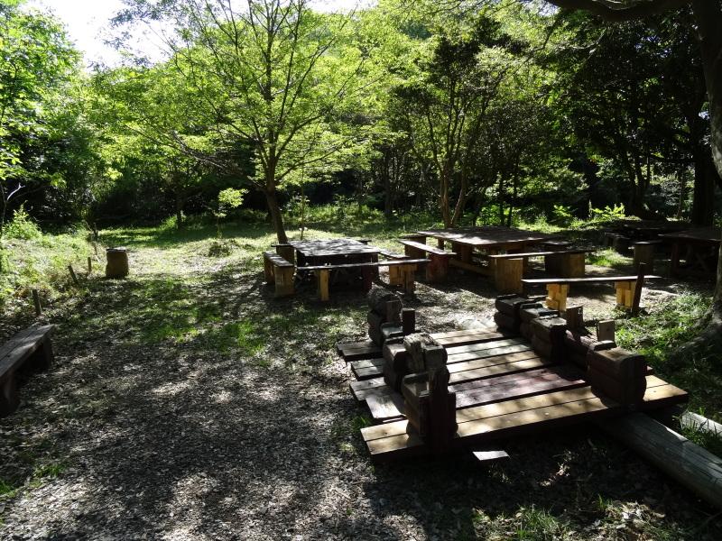淡輪小学校1年生にお土産にあげたドングリが苗木になって帰ってきました     by     (TATE-misaki)_c0108460_21262830.jpg