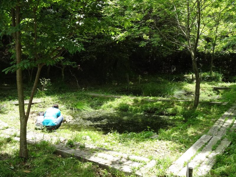淡輪小学校1年生にお土産にあげたドングリが苗木になって帰ってきました     by     (TATE-misaki)_c0108460_21262950.jpg
