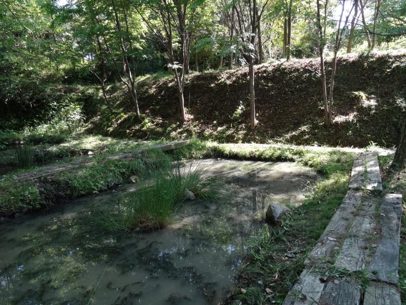 淡輪小学校1年生にお土産にあげたドングリが苗木になって帰ってきました     by     (TATE-misaki)_c0108460_21263143.jpg