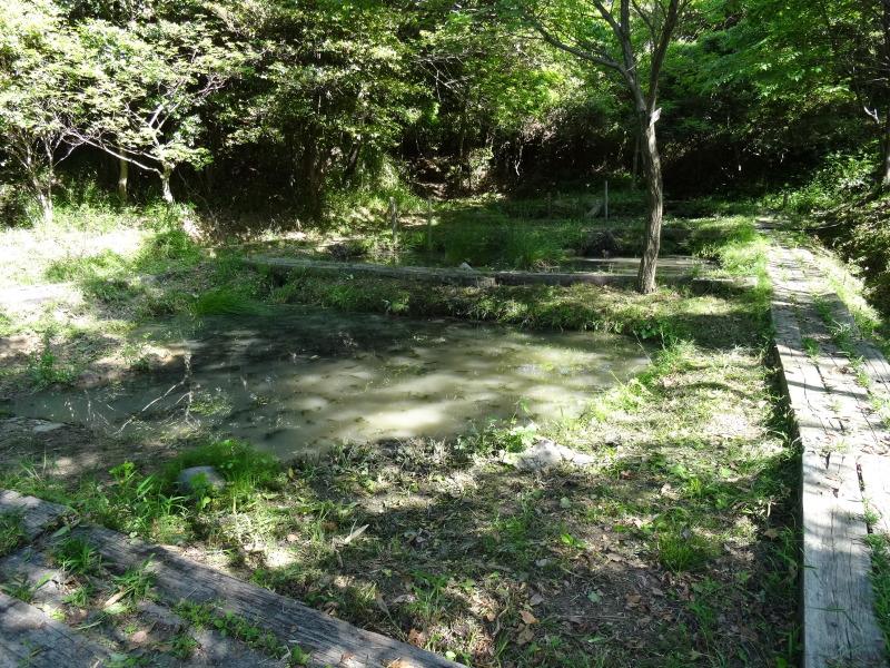 淡輪小学校1年生にお土産にあげたドングリが苗木になって帰ってきました     by     (TATE-misaki)_c0108460_21422775.jpg