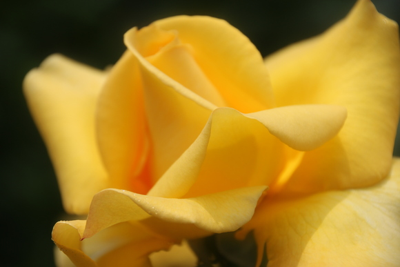 SKY140519 バラが咲いた・・・・・・_d0288367_1824660.jpg