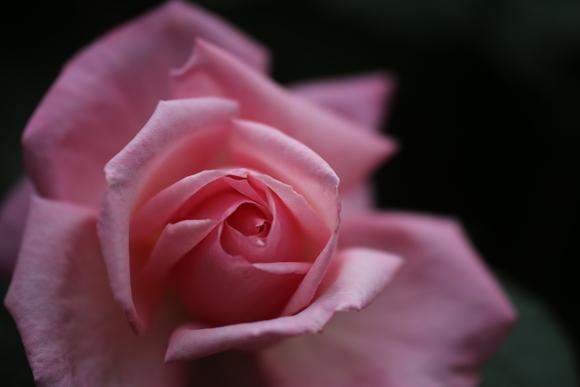SKY140519 バラが咲いた・・・・・・_d0288367_1826810.jpg