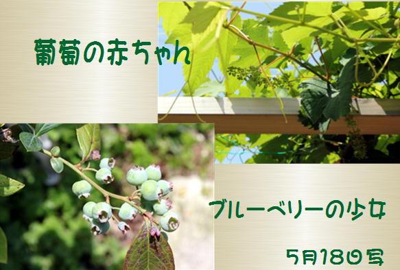 f0003174_1521213.jpg