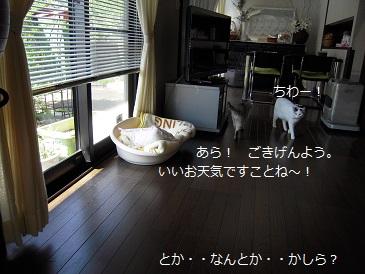 c0139488_10115728.jpg