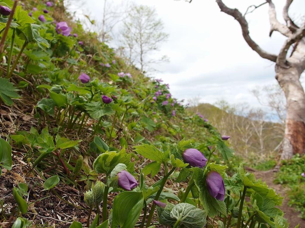 稀府岳と伊達紋別岳、5月18日-速報版-_f0138096_2145926.jpg