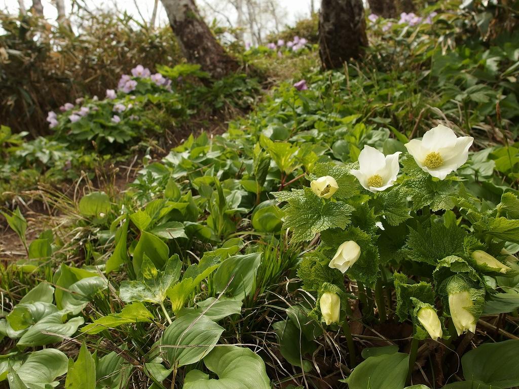 稀府岳と伊達紋別岳、5月18日-速報版-_f0138096_2151257.jpg