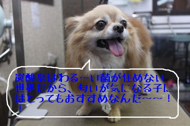 b0130018_13133180.jpg