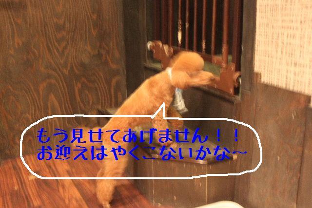 b0130018_13161963.jpg