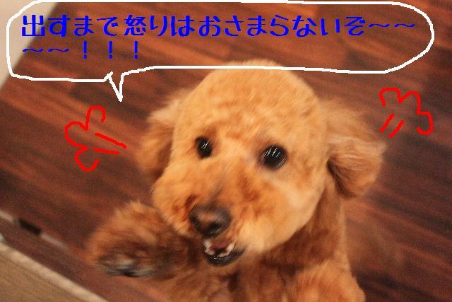b0130018_13431581.jpg
