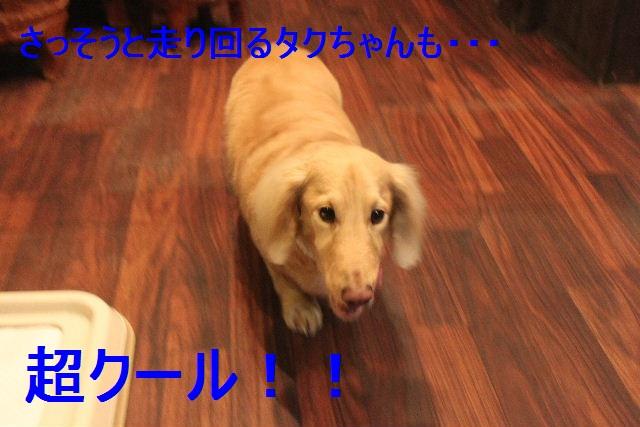 b0130018_21595546.jpg