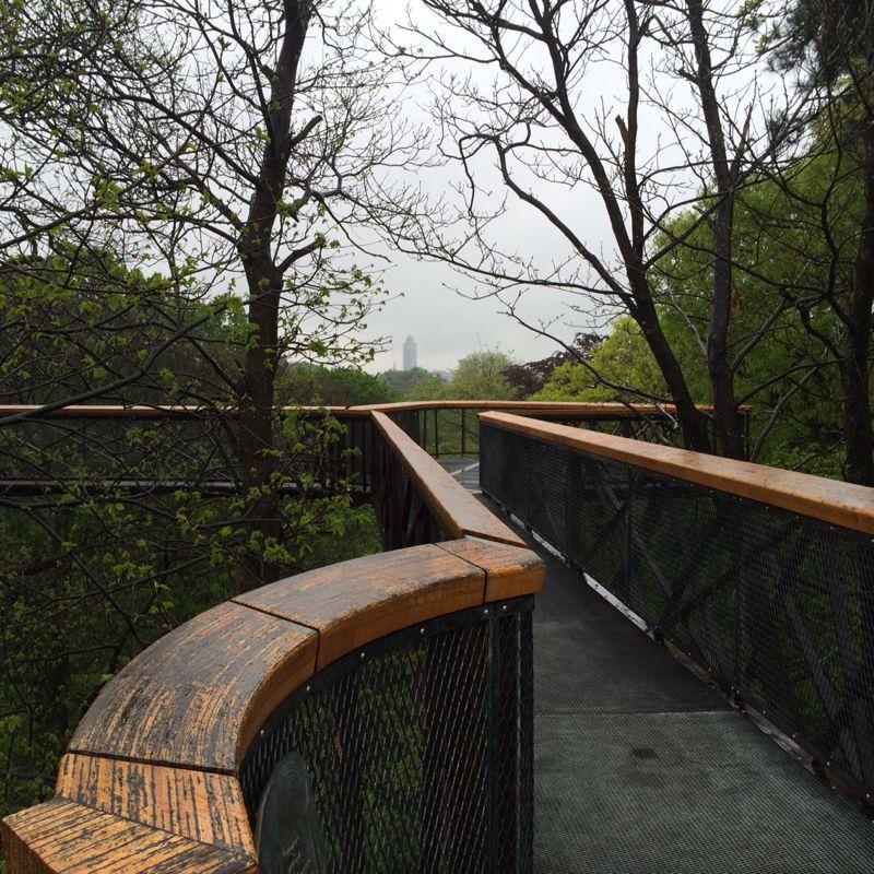 Tree top walkway_c0128818_17341511.jpg