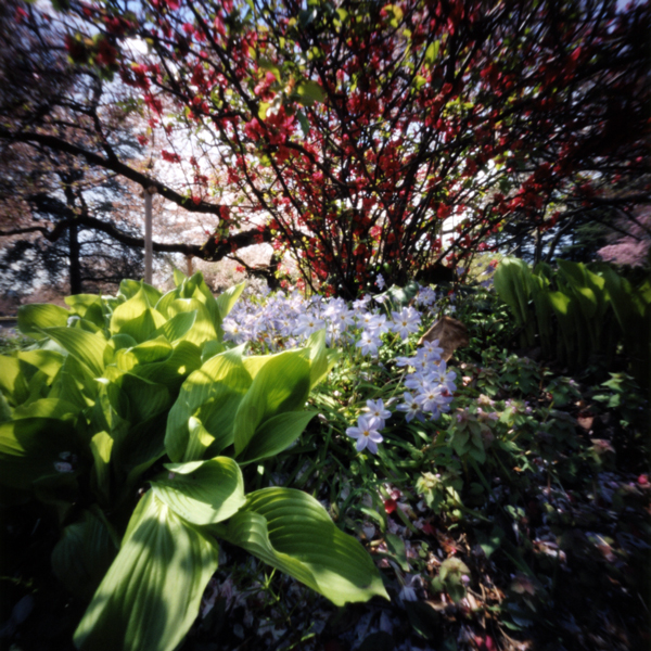 今年の桜 2014 新宿御苑(5) Pinhole Photography_f0117059_14521623.jpg