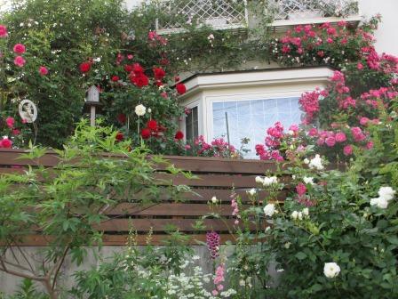 小さな庭のバラが見ごろになりました~_a0243064_0483677.jpg