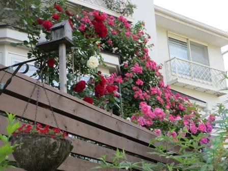 小さな庭のバラが見ごろになりました~_a0243064_0495342.jpg