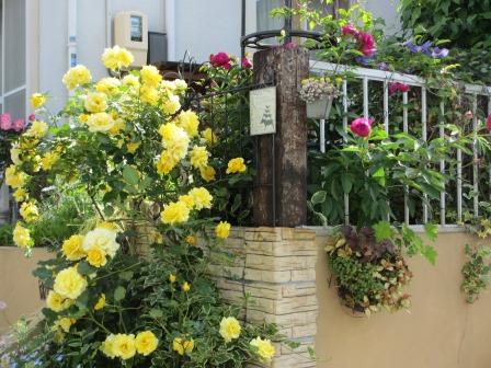 小さな庭のバラが見ごろになりました~_a0243064_0522651.jpg