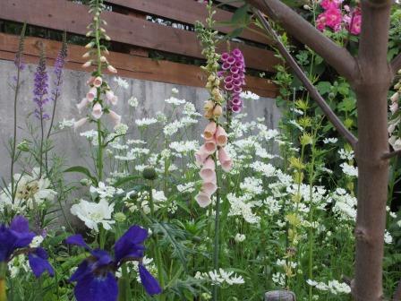 小さな庭のバラが見ごろになりました~_a0243064_165373.jpg