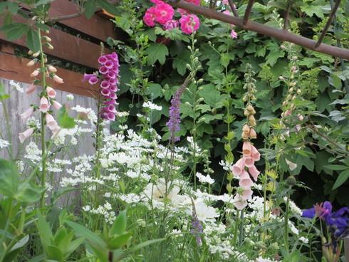 小さな庭のバラが見ごろになりました~_a0243064_181282.jpg