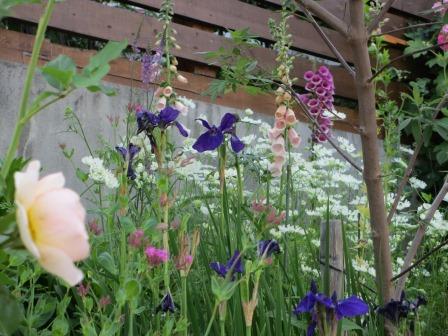 小さな庭のバラが見ごろになりました~_a0243064_183067.jpg