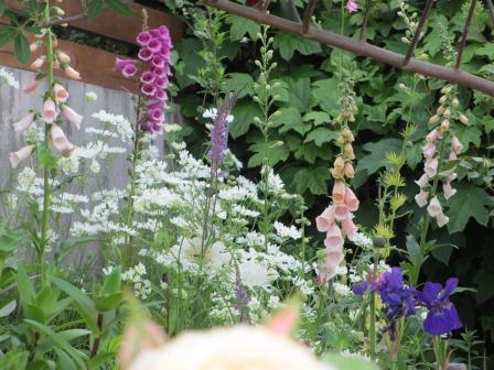 小さな庭のバラが見ごろになりました~_a0243064_193068.jpg