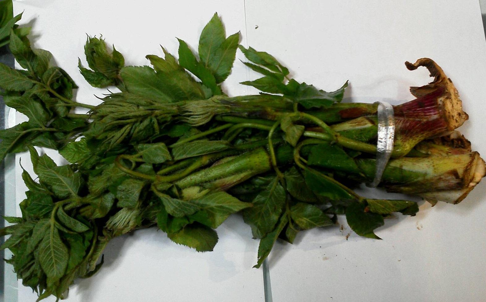 山菜 あずきな・うど_b0236665_8265242.jpg