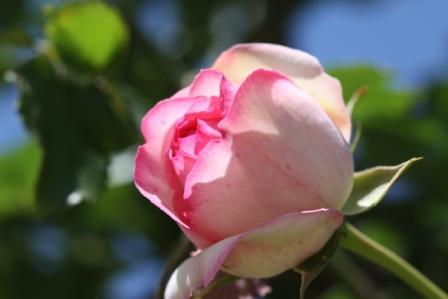 智光山公園のバラ苑_a0117168_11203954.jpg