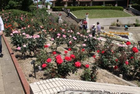智光山公園のバラ苑_a0117168_11213670.jpg