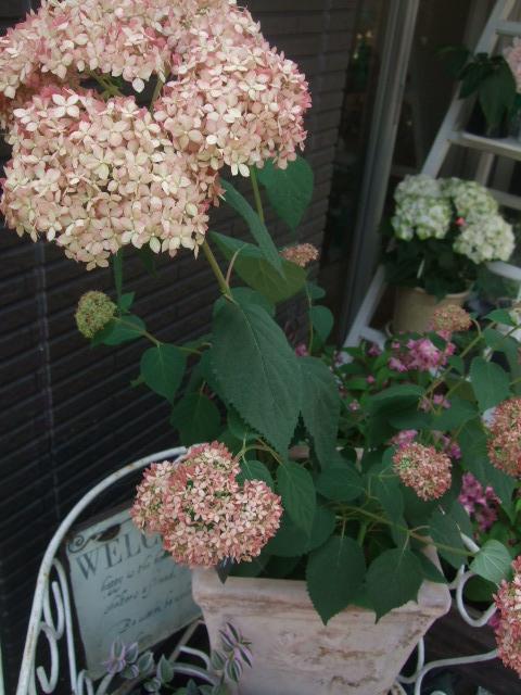 オークリーフ(5月の花たち)_f0049672_17475823.jpg
