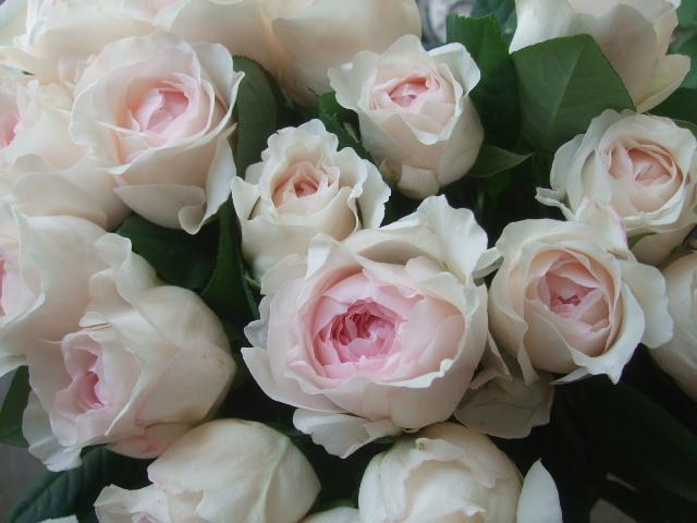オークリーフ(5月の花たち)_f0049672_17571435.jpg