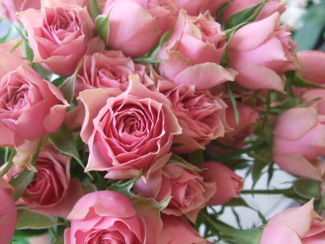 オークリーフ(5月の花たち)_f0049672_17573187.jpg
