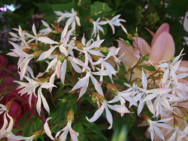 オークリーフ(5月の花たち)_f0049672_17574259.jpg