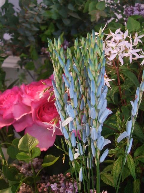 オークリーフ(5月の花たち)_f0049672_17574985.jpg