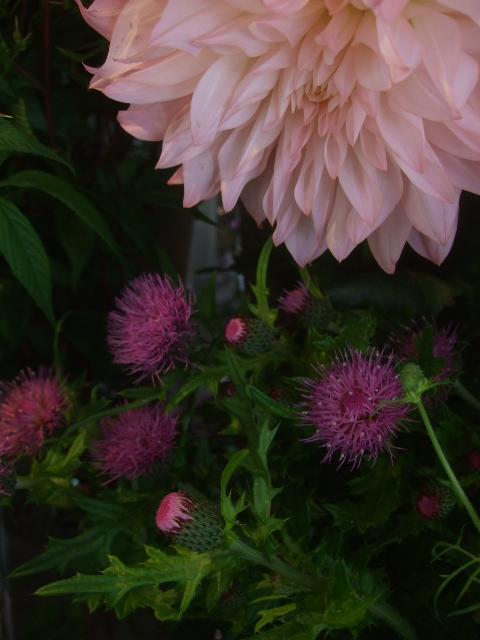 オークリーフ(5月の花たち)_f0049672_17575830.jpg