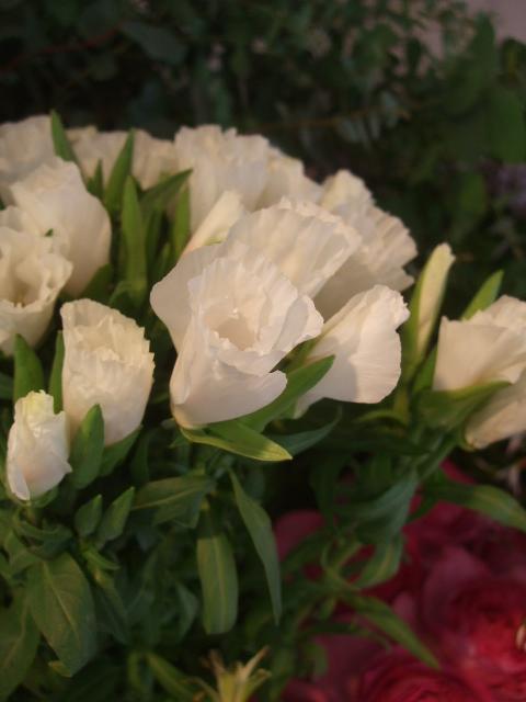 オークリーフ(5月の花たち)_f0049672_17582471.jpg