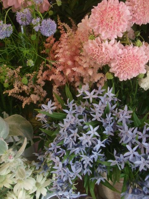 オークリーフ(5月の花たち)_f0049672_1758663.jpg