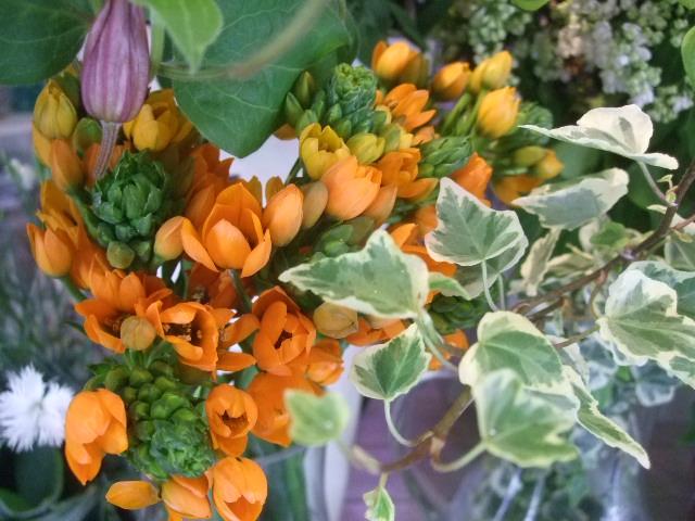 オークリーフ(5月の花たち)_f0049672_17591520.jpg