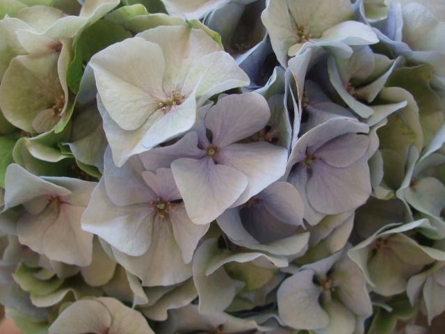 オークリーフ(5月の花たち)_f0049672_1813770.jpg