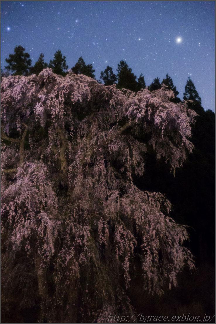 福田寺の糸桜 と 土星_b0191074_2343972.jpg