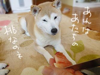 桃_b0057675_10193135.jpg