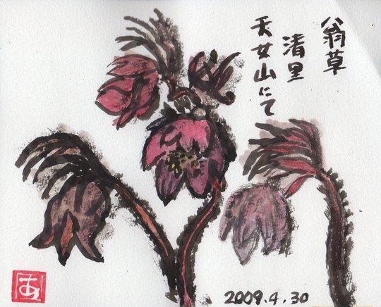 オキナグサ_e0232277_1035135.jpg