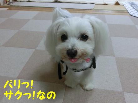 b0193480_20112390.jpg