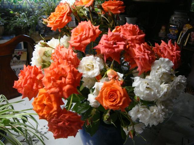 ーー友人!よりの、バラの花!プレゼント!ーーありがと~。_d0060693_18401355.jpg