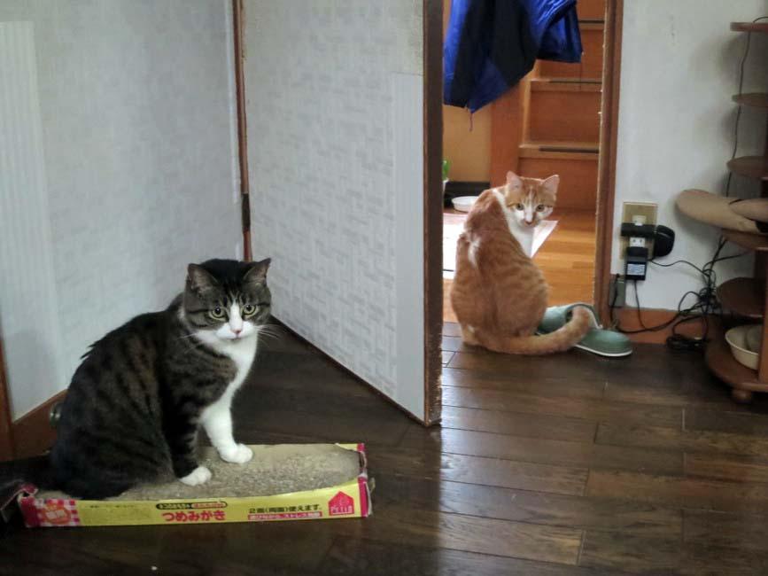 【猫】距離_f0141609_17173115.jpg