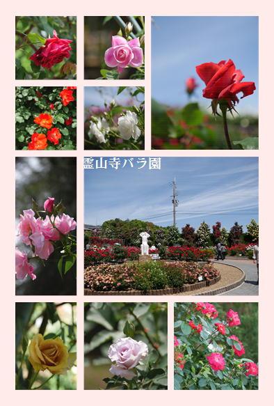 霊山寺バラ園_f0292335_16301866.jpg