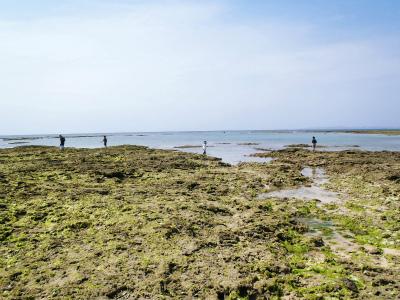 カーミージーの海の散策⑫_c0180460_22463615.jpg