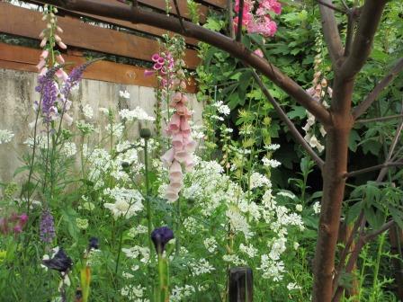 お花いっぱいの庭に近づきました~♪_a0243064_21594132.jpg
