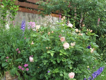 お花いっぱいの庭に近づきました~♪_a0243064_2204643.jpg