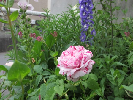 お花いっぱいの庭に近づきました~♪_a0243064_22192925.jpg