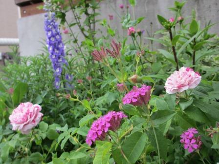 お花いっぱいの庭に近づきました~♪_a0243064_22194072.jpg